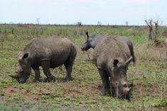Rhino Balule game reserve