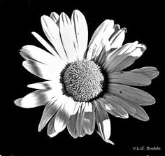 October Daisy - Limited Edition 1 of 10