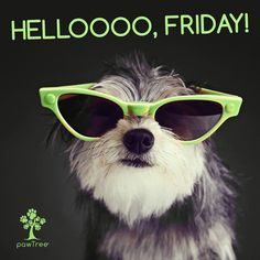 Smile It's Friday. Pet Nutrition, Animal Nutrition, Healthy Pets, Cat Grooming, Family Business, Pet Care, Your Dog, Dog Cat, Friday