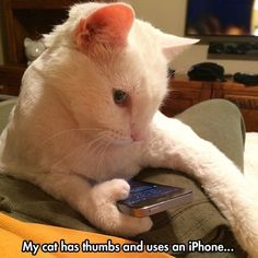 Mac has got to see this ! My paws are more clearly defined and have 7 digits on each paw. Must, must have a phone.