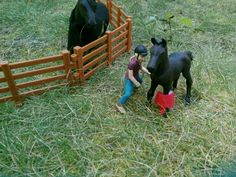 Protective mamma Names: Flicka and Faith Breeds: Friesian Gender: Mare and filly Owner: Lauren D