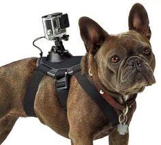 "GoPro ""Fetch"" dog harness & mount."