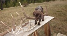 Got a retriever? Here are some useful tips for training your shed #dog. #hunting http://www.wideopenspaces.com/youve-training-shed-dog-wrong-whole-time-pics/