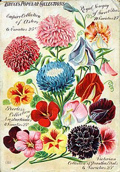 dippe brothers trade catalogue of flower and garden seeds, 1896-97 (Would be a pretty living room print)