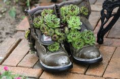 Drought-tolerant perfect for container gardens: moss rose (Portulaca grandiflora), hens and chicks, sedum, and yucca Organic Gardening, Gardening Tips, Gardening Quotes, Arizona Gardening, Hydroponic Gardening, Flower Gardening, Portulaca Grandiflora, Garden Boots, Old Boots