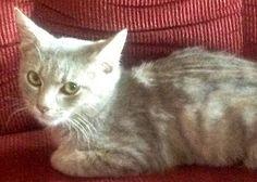Partner spotlight: West Virginia's P.U.R.R. helps a feral cat find his voice