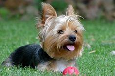Chip With His Ball :) | Flickr: Intercambio de fotos