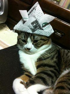 Kyoutarou  #neko #cat  (via buntaroudono)