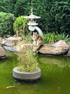 Abbie by the pond