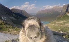 Curious Marmot Interrupts Greenpeace Video With Most Adorable Photobomb Ever
