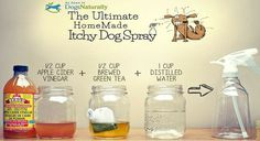 DIY Natural Anti-Itch Spray For Dogs