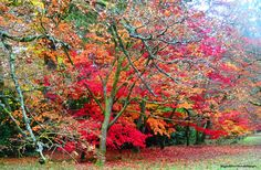 Autumn colours by ByGaddArtandDesign on Etsy