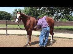 How to test for equine ulcers without having to pay for scoping. This is an absolutely great video to watch! These same pressure points he palpates are exactly where Indy gets sensitive whenever I groom her.  Every horse owner should read this because ulcers are so common.