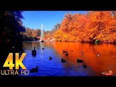 Расслабляющие Звуки Золотой Осени для Души и Релаксации в 4K Ultra HD - YouTube Relaxing Room, Relaxation Room, River, Youtube, Painting, Outdoor, Art, Rivers, Paint