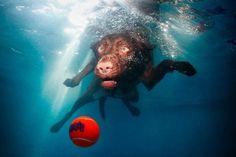 Коллекция Underwater Dogs