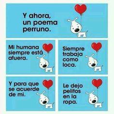 #perros #perretes #amoamiperro #canes #amoamiperro #perrete #perrito