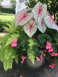 Outdoor Flowers, Outdoor Planters, Outdoor Gardens, Outdoor Potted Plants, Container Flowers, Flower Planters, Container Plants For Shade, Potted Plants For Shade, Garden Posts