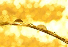 The gold rush by pqphotography on DeviantArt Gold Rush, Water Drops, Bangles, Amazing, Inspiration, Beautiful, Jewelry, Deviantart, Woman