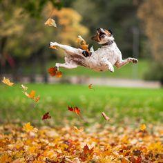 207a8c33bdd1bdaa8188eabfbc58bc73--autumn-animals-photography-portfolio - Show Posts - hubag bohol