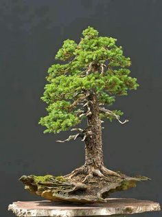Bonsai beauty. Looks surreal.