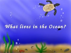 The PowerPoint presentation introduces students to animals that live in the ocean. These animals include sharks, sea turtles and seahorses, and many more. The PP also has sound affect elements as well. You can edit the PP to fit your needs!I hope you enjoy these free download!