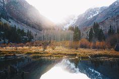 Aspen grove in the Eastern Sierra CA [OC] [5184 3456] #reddit