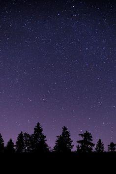 Pine Trees during Nighttime