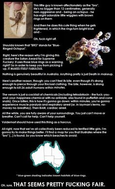 Finally something in Australia that isn't trying to kill you? Nope… Just ANOTHER reason why I will never go to Australia. Octopus Vulgaris, We Are Bears, Meanwhile In Australia, Science, The More You Know, Marine Life, Sea Creatures, Mind Blown, Make Me Smile