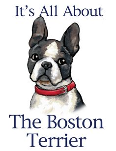 My first love was a Boston Terrier<3
