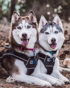 """2,647 Likes, 63 Comments - Husky Squad ™ (@huskysquad) on Instagram: """"Good friends don't let you get in trouble... alone Kimahri + Yuna - #huskysquad @huskysquad…"""""""