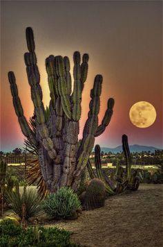 ~~Cactus Garden, Balboa Park | surreal moonscape, San Diego, California by Artypixall~~: