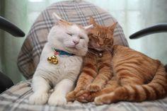 Cat_Cheek on Cheek