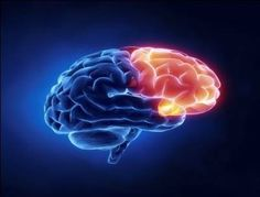 A new study from Duke University indicates that special brain cells known as astrocytes may play a significant role in healing the brain after a traumatic injury.  These cells were once considered an impediment to brain repair, but have now been shown to be necessary to stop bleeding and promote healing after a stroke or a concussion. The astr...