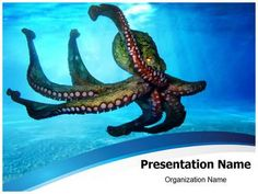 Octopus Powerpoint Template is one of the best PowerPoint templates by EditableTemplates.com. #EditableTemplates #PowerPoint #Mediterranean #Fish #Undersea #Depth #Light #Octopus #Sun #Sea #Submarine #Nature #Life #Wild, #Oxygen #Abyss #Marine #Scuba #Water #Emotion #Swim #Freedom #Ray #Bubbles #Tentacle #Waves #Surface #Cephalopod #Subacquatic #Travel #Deep Sea #Underwater #Suckers #Aquarium #Vulgaris #Back-Light #Harmony #Holidays #Deep #Piovra #Submerged #Ocean