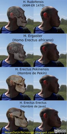 What a Homo Erectus Would Look Like Today Early Humans, First Humans, Biological Anthropology, Forensic Anthropology, Human Evolution, Prehistoric Creatures, Ancient Mysteries, Science And Nature, Natural History