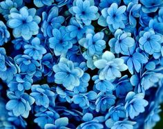Sweet blue flowers - make a purely blue posie or mix with Australian natives