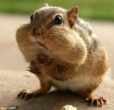 What nuts?