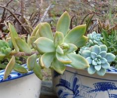 Grow Lights   Supplemental Light Sources For Succulent Plants | Succulents  | Pinterest | Grow Lights, Plants And Gardens