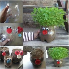 Plastic Bottle Planter Pictures, Photos, and Images for Facebook, Tumblr, Pinterest, and Twitter