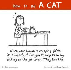 How To Be A Cat !