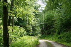 Im Frühling im Wald unterwegs  - Gerade gefunden auf http://ronni-shop.fineartprint.de