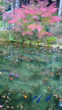 Ciel Rose, Water Aesthetic, Gifu, Fairy Land, Belle Photo, Aesthetic Pictures, Painting Inspiration, Land Scape, Ethereal