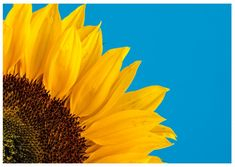 """Use your own pictures – or select one of our thousands of designs to create a unique postcard for just about every occasion. Like """"Sunflower"""", from our """"Art, Photo & Illustration Cards 🎨📸"""" category. Sunflower Pictures, Sunflower Art, Sunflower Fields, Yellow Sunflower, Micro Photography, Close Up Photography, Photography Basics, Product Photography, Summer Cover Photos"""