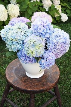 Hydrangea and An Old Stool One of my all time favourite flowers. Have just order 40 of these to plant around the cottages.  Hopefully this coming summer we will have vases of these in the cottages welcoming our guests @ Freshwater Creek Cottage & Farm Stay. www.fwcreek.com.au
