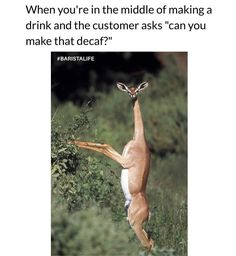 Huh wut? Uh yeah sure let me start over  #BaristaLife #OhDeer {: @tinsecoco}