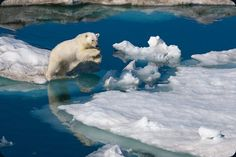 """""""Polar Obsession 1"""" by Paul Nicklen."""