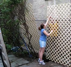 Lattice on chain link fence//good financially smart option for privacy! : Lattice on chain link fence//good financially smart option for privacy! Chain Link Fence Privacy, Privacy Fence Designs, Privacy Landscaping, Backyard Privacy, Privacy Fences, Backyard Fences, Garden Fencing, Chain Fence, Lattice Fence Privacy