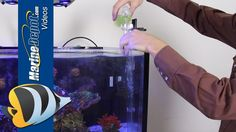 How to Introduce Copepods into your Reef Aquarium