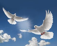 White Doves & Clouds & a Blue Sky ....