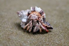 23 Cool Hermit Crab Pictures
